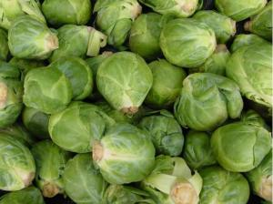 Minister Dustin said the coalition would seek an increase in Brussel sprouts from the EU to feed the turkeys.